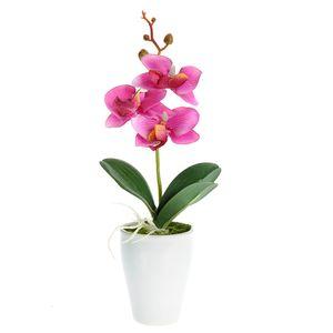 Orhidee roz in ghiveci