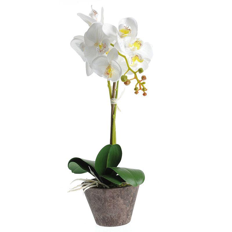 Orhidee-alba-in-ghiveci